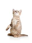 Thumb kitten from marianne