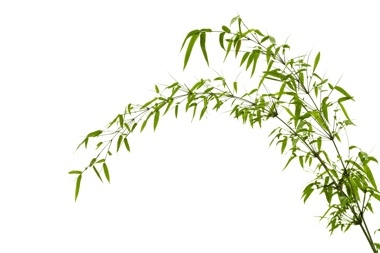 Header bamboo leaves 253